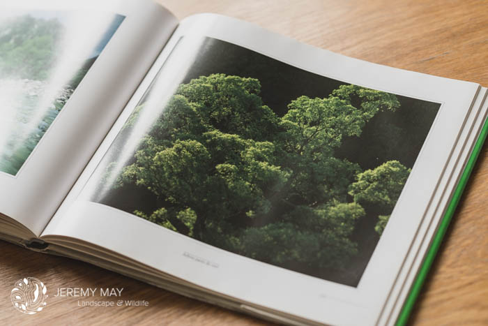 Titre : Arbres parés de vert de Shinzo Maeda