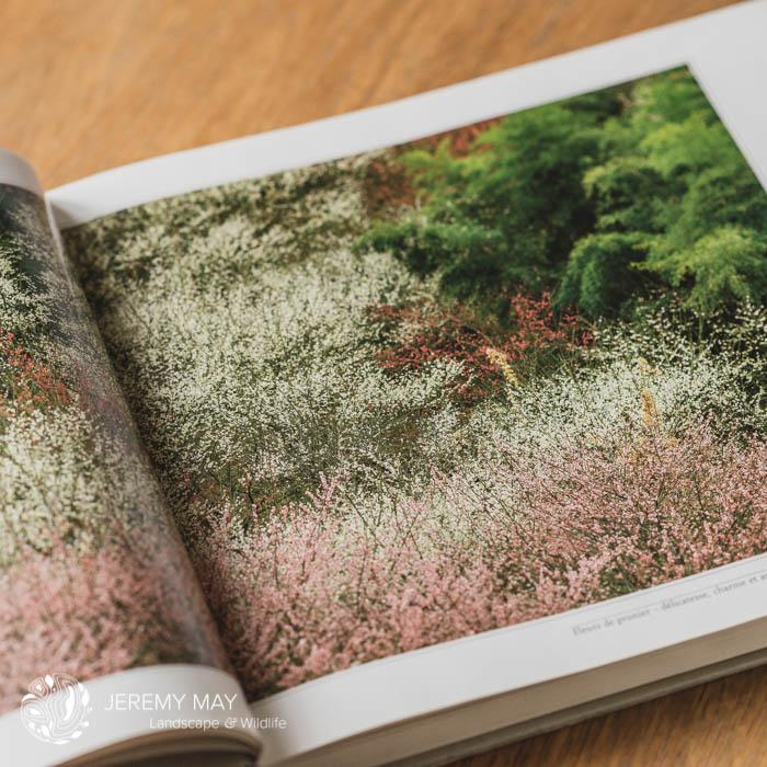 Titre : Fleurs de prunier - délicatesse, charme et arôme de Shinzo Maeda