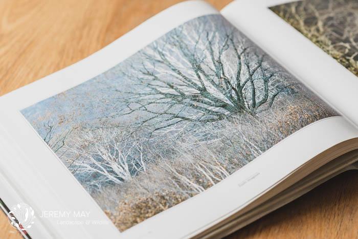 Titre : Forêt imaginée de Shinzo Maeda