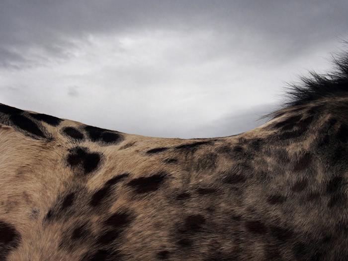 Photographie de Michel Friz - Lignes de crête 1